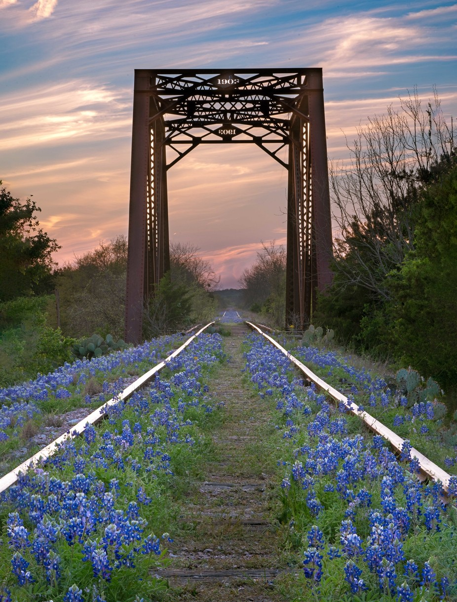 Spring Bluebonnets by KRL_Photo - Image Of The Month Photo Contest Vol 44