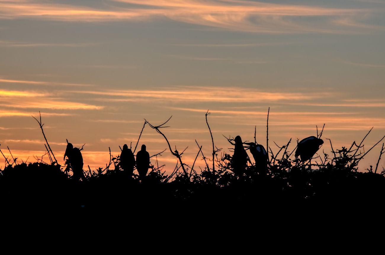 A golden sunrise silhouettes nesting birds in Florida.