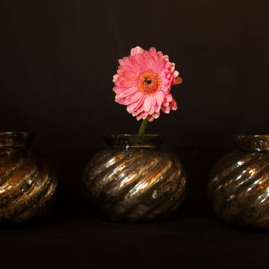 Germini flower in vase with dark background