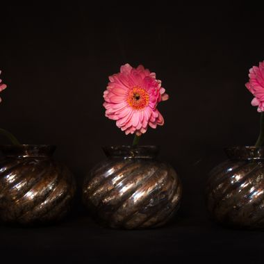Germini flowers in vases