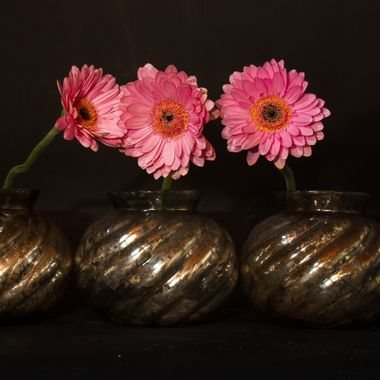 Three Germini flowers in vases on dark background