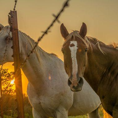 Oklahoma Horses