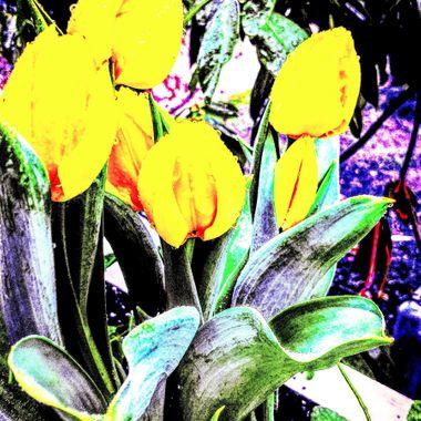 Tuliptopia