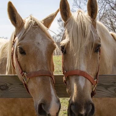 These horses were so sweet and the way they put their heads together and almost posed for the shot made me smile.