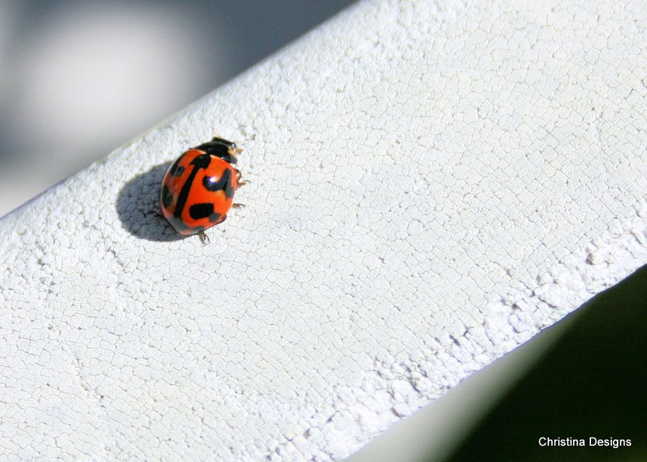 Ladybug came to say hello on my outdoor chair one day