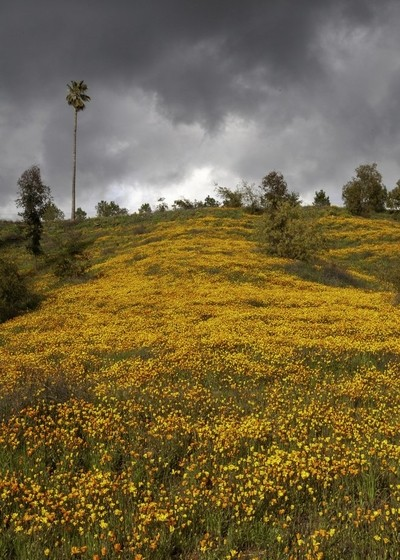 Hills of Crafton