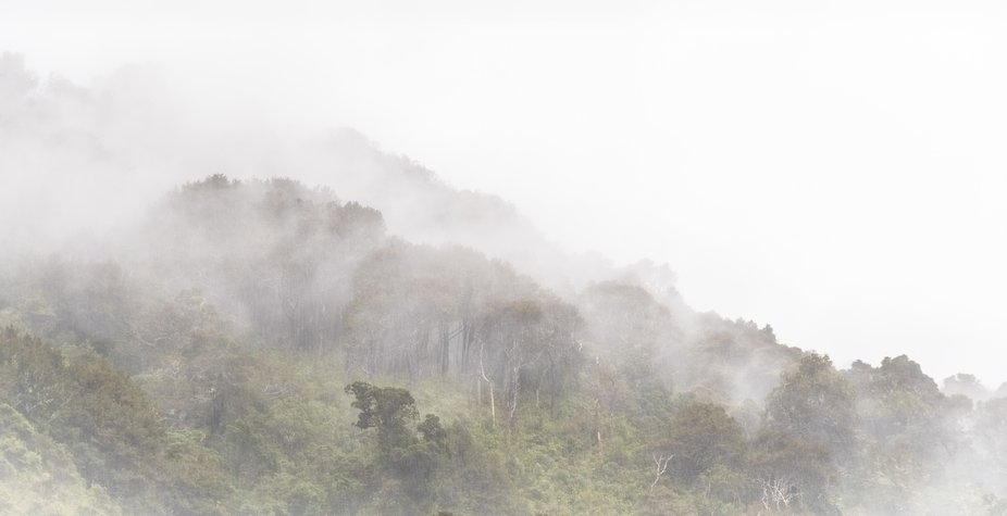 Early morning mist and rain rolls in across the native bush-clad hillsides of the Marlborough Sounds