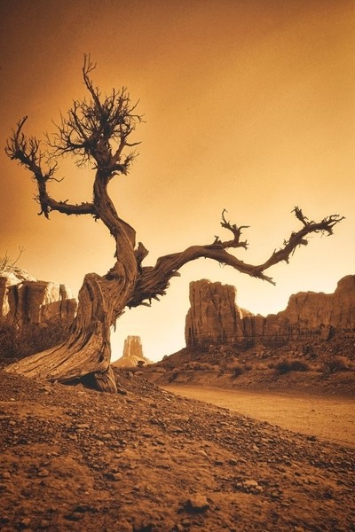 thumb tree, 2.4