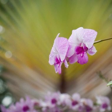 Orchid with a palmtree in the background with nice bokeh