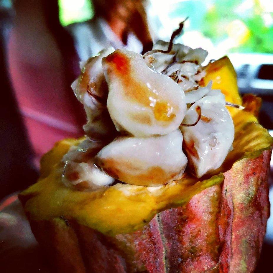 Kakaobohne. Außen süß innen bitter
