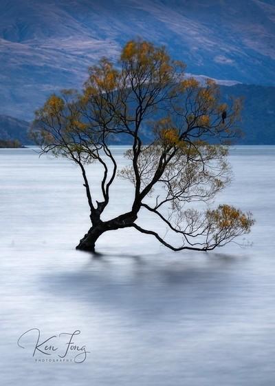 That Wanaka Tree 1