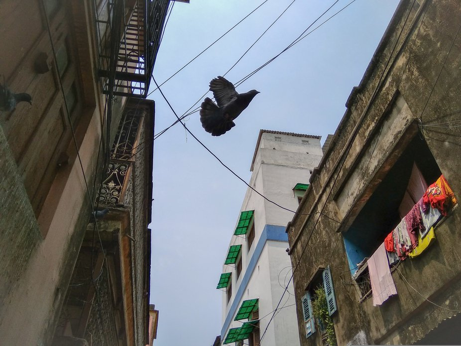 i was waiting on the alley, i knew the pigeons were hovering above but when i looked up, they wer...