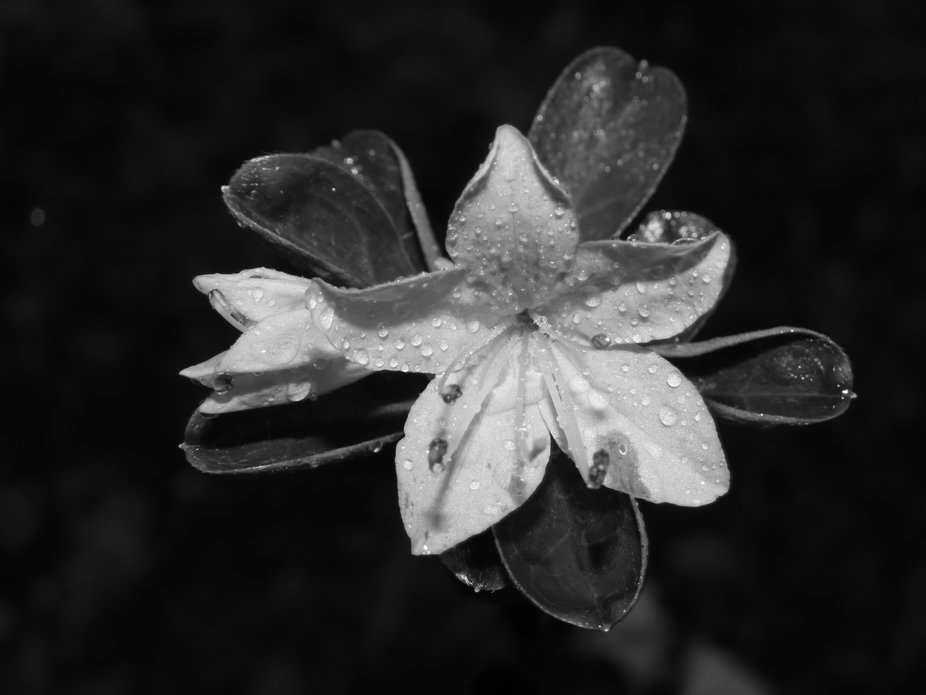 I wanted to practice getting photos with rain drops so I thought, why not experiment and go out a...