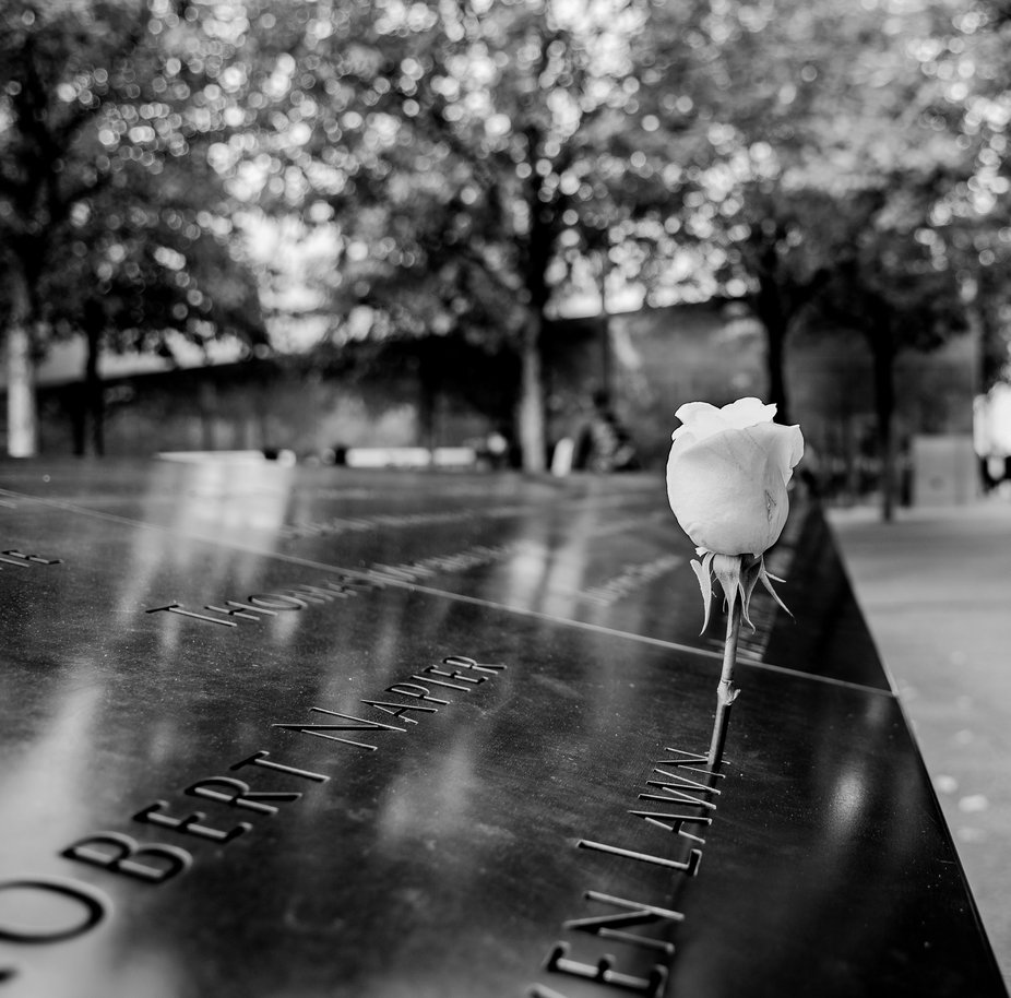 Taken at the 9/11 memorial in New York City. They place a white rose on a person's name ...