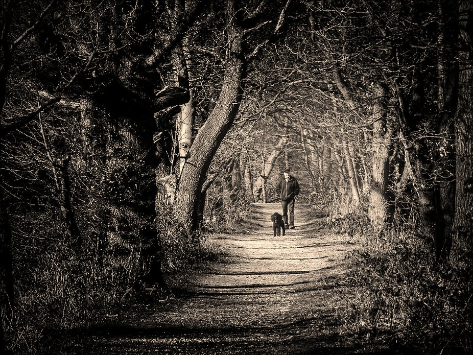 Man and his dog walking down a tree lined path