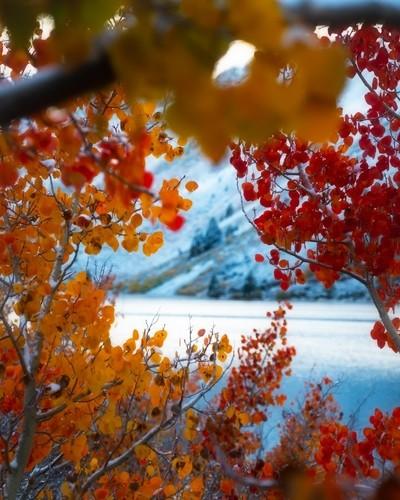 sierra pass foliage-3