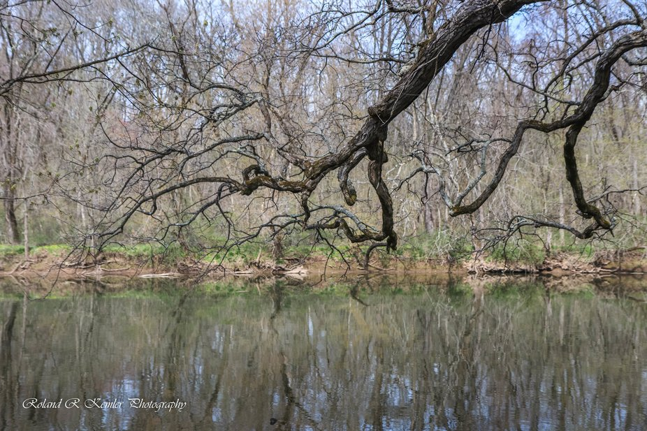 Tree Art along the Neshaminy Creek