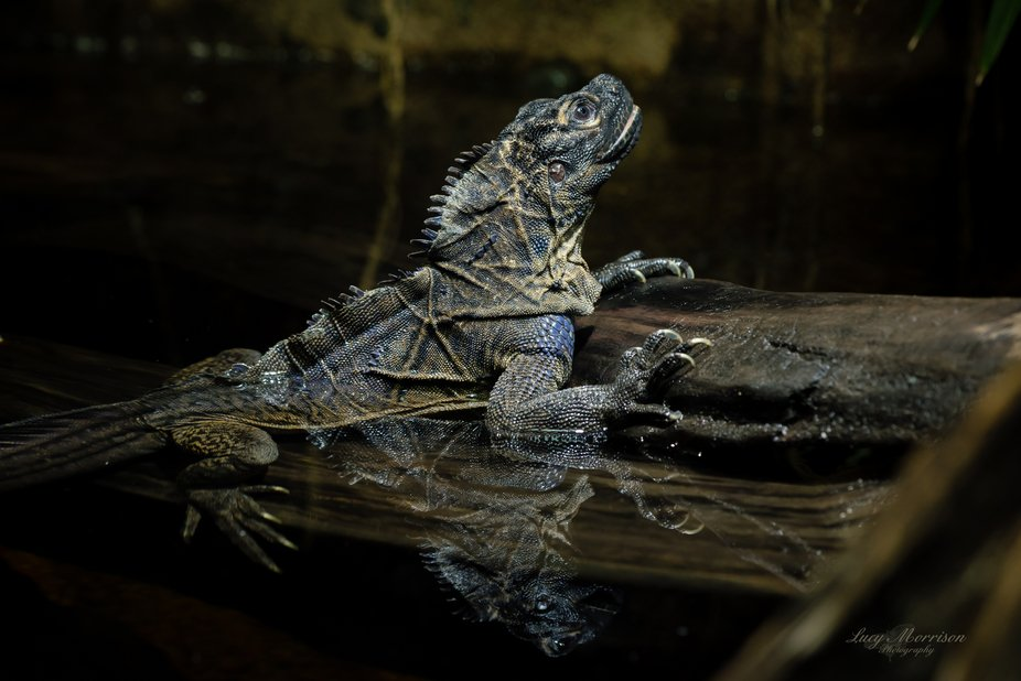 Reptile Reflection