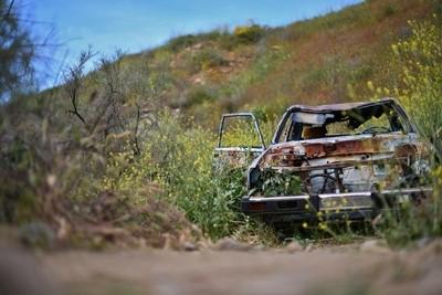 Rusty car hidden in flowers