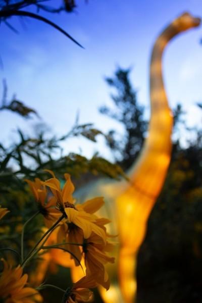 RAWR Flower