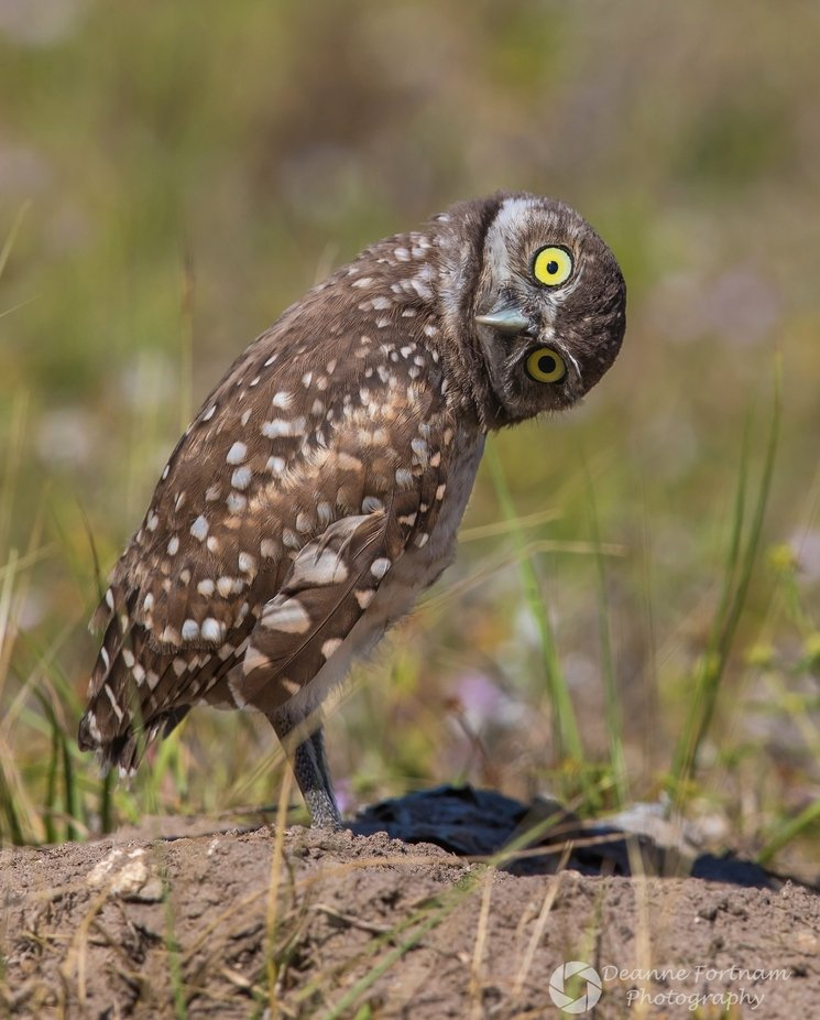 """""""What's That?"""" by deannefortnam - Image Of The Month Photo Contest Vol 44"""