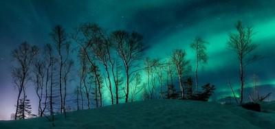 The Nordic Treeline