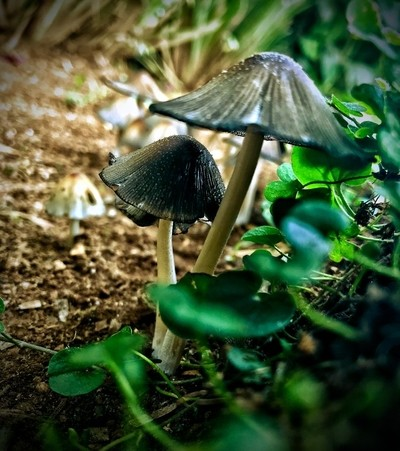 LITTLE FUNGI UNDER COVER
