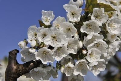 Blossom8545.JPG