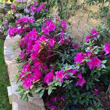 Backyard planter!