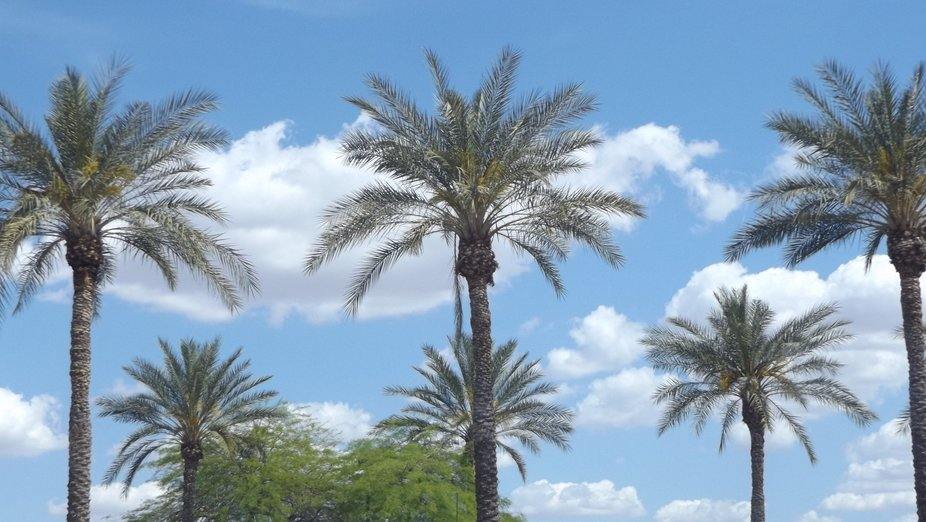 Palm trees on a fluffy cloud day