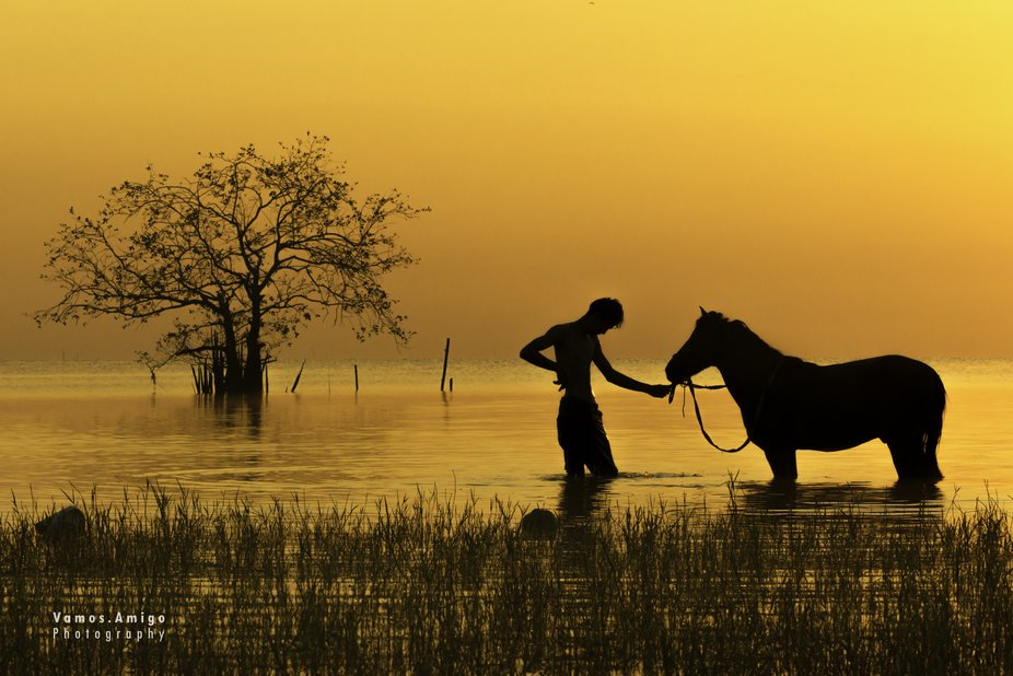 Silhouette of horse and man