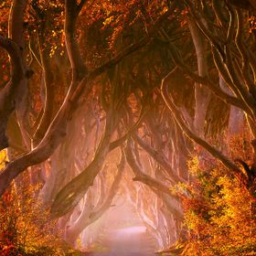 I spent whole day in Northern Ireland, visiting forests and parks and looking for some nice Autumn sceneries. My first stop was Dark Hedges in An...