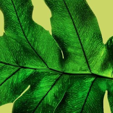 Leaf It Alone