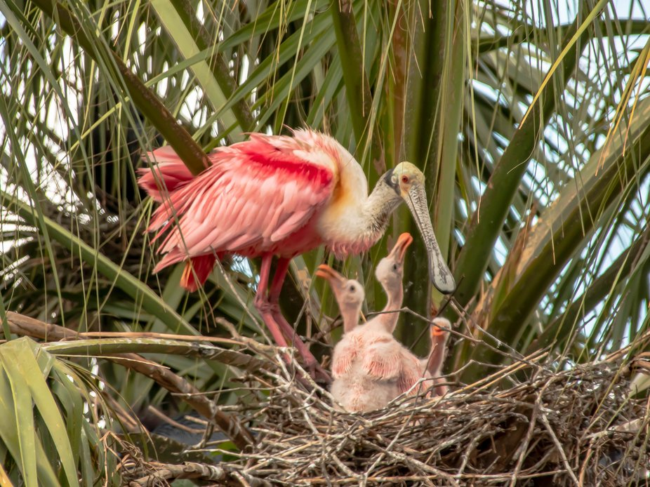 """I was fortunate enough to discover a this family in a nest that was """"reachable""""..."""