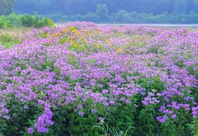 Stunning Meadow