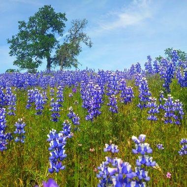 Ridge wildflowers