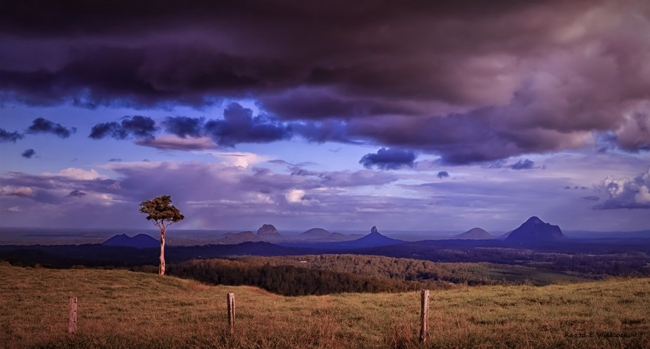 A lone tree stands high above the Glass house Mountains