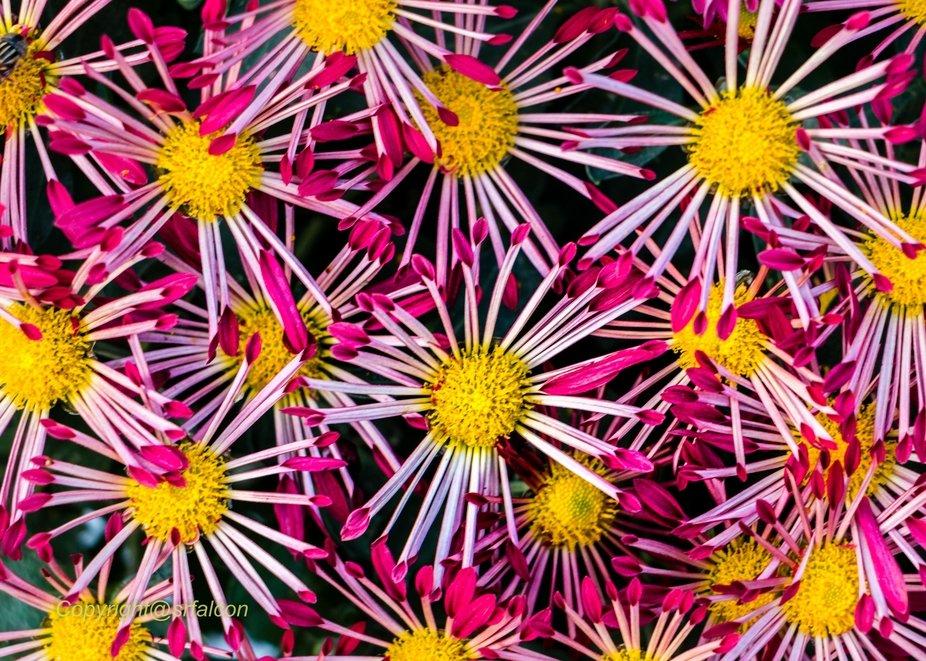 Colourful seasonal flowers