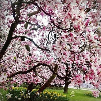Time for spring ❄ #hugZz ツ