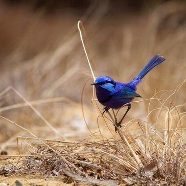 Your Native Birds