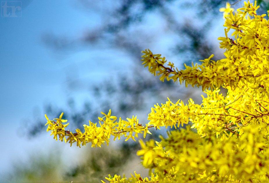 Spring in gold