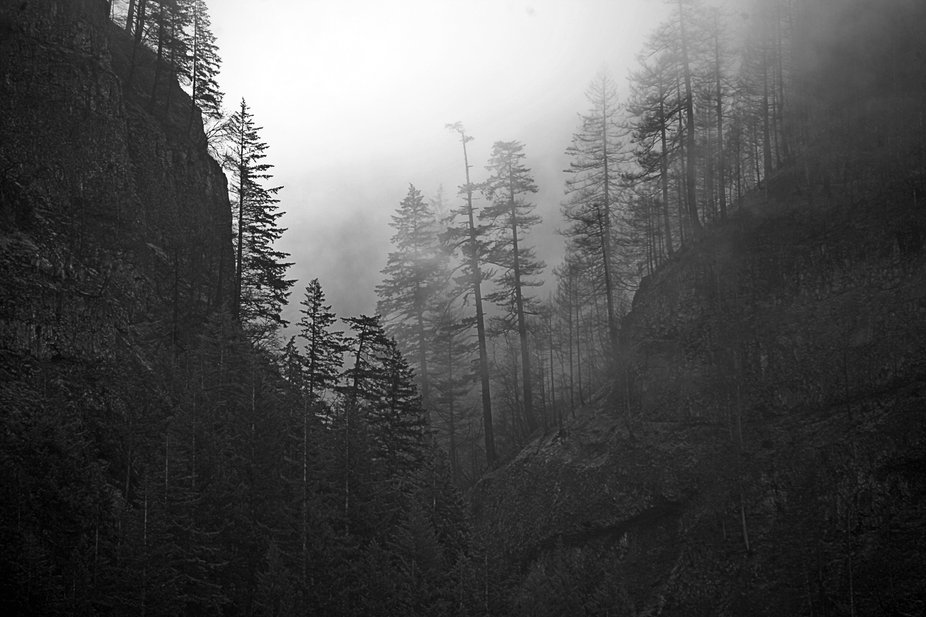 This was my forest trip today in Oregon just West of Hood River.