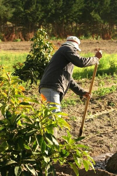 2012-06-12 Ecuadorian Farmer irrigating fields