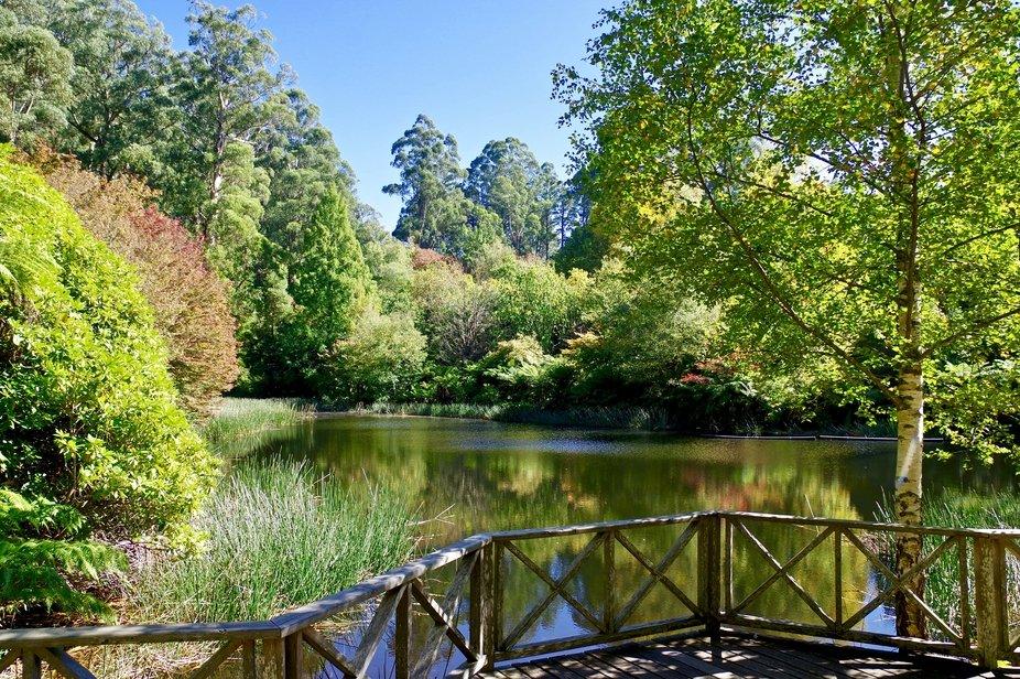Nat Rhododendron Gardens Conservation Reserve, Olinda, Australia