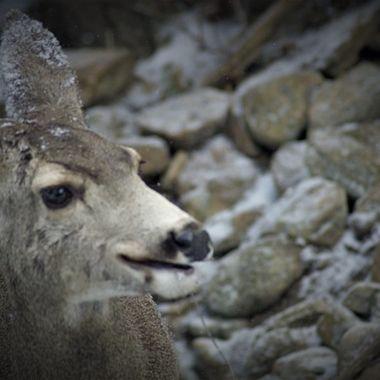 Smiling Deer
