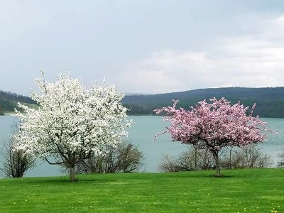 Spring at the Lake
