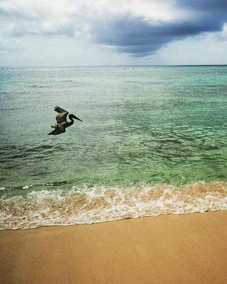 Pelikan beim Fischen