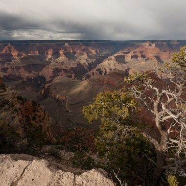 The vegetation on the rim of the canyon provides many framing opportunities.