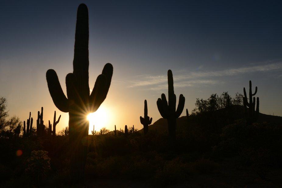 The Sun and the Saguaro