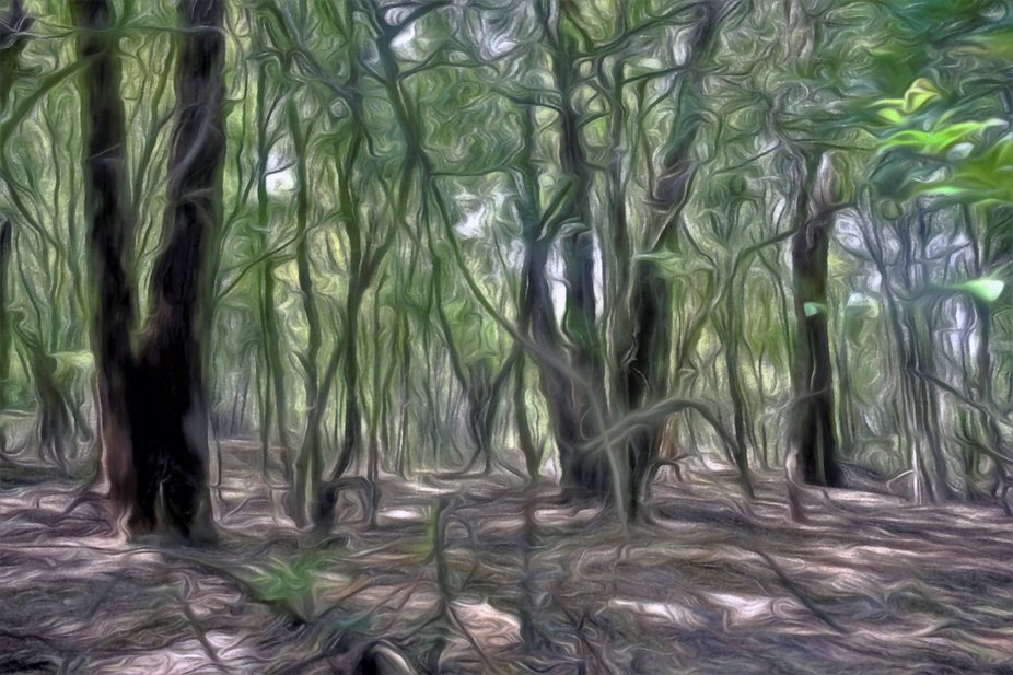 Fluid Forest